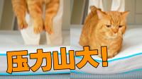 当猫自由落体时,到底多有杀伤力?!