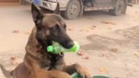 狗狗主动帮忙捡垃圾,结果还被路人嫌弃,最后只能委屈哭了