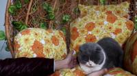 猫咪被摸脚以后会发生哪些有趣的事情?