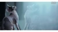 「Cat's Voice 喵~」奶牛的初雪 [王了了电影出品]