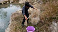 这深潭里的红鲤鱼太多,小伙提鱼笼收获不少,太漂亮了