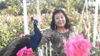 津味旅游-海南三亚-机场免税店-耶田古寨-亚龙湾国际玫瑰谷