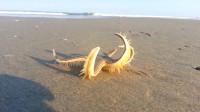 海星被大海冲到沙滩上,手舞足蹈的在跳舞,太魔性了
