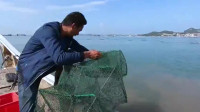 农村阿峰在海区放地笼,一网上来抓到好多海鲜,还有龙胆