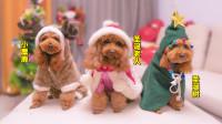 主人花空心思布置圣诞节,3只狗狗咬烂彩球,还差点推倒圣诞树!