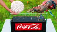 可乐曼妥思遇上龙虾,会发生什么?下一秒让人口水直流!