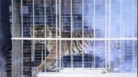 笼子里的老虎变成了女人?看10遍也不敢相信!魔术大揭秘