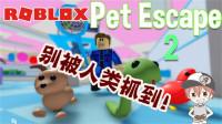 "Roblox""宠物逃生2""波波仔解说:人类与宠物之间的战争又开始啦!"