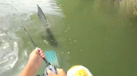 钓鱼季破解版
