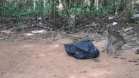 """猴子发现一个会动的""""塑料袋"""",好奇地上前,下一秒憋住别笑"""