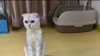 萌宠:猫咪的妹妹生小宝宝了,猫咪看着孩子懵了