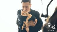好莱坞动物演员加盟!《宠爱》成绩破6亿!惊队橘猫重磅出镜!