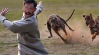 人被狗追时,立马蹲下是否有用?现在知道还来得及!