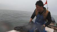 外海生物千奇百怪,阿阳捕鱼二十年从未见过,毒物值钱货什么都有