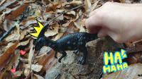 认识副栉龙、霸王龙等6种恐龙
