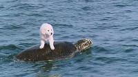 小狗被困海边,出现只海龟,将它带到对岸