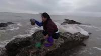 大浪中赶海石坑上的大货很是耀眼,比拳头还要大几倍,美女抓到超兴奋