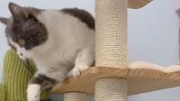 萌宠:眼前这一桌丰盛的晚餐,就连猫咪都爱上过年了呢!