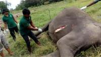 大象死亡后,为什么尸体不能碰?非洲小伙不信邪,结果意外发生了!
