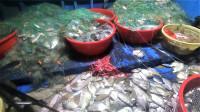 深海鱼获大爆发了,鱼群飞出海面到处跳,阿彬几网下去大赚8000块