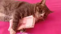 我家的猫咪只要是看见钱就不撒手,不管我用什么换都不给我,我算是服气了!