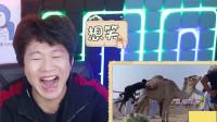 憋笑大挑战:有脾气的骆驼,一脚把骑手踢一边去!