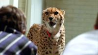 电影:男孩在学校里上课,忽然一头猎豹进入教室,来找他!