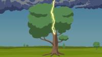树木是绝缘体,为什么雷电能把树木劈倒?看雷电形成原因就知道