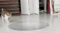 老外在地上绘制一个3D大坑,就等着猫咪上场,看完憋住别笑