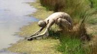 """女子去河边散步,看到一只""""怪物""""正趴着喝水,走近一看吓到了!"""