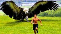 全球最大的老鹰,狮子被当作食物,至今没有发现它的天敌!