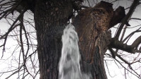 """全球最会""""喷水""""的树,数十年从没断过,水从何而来?"""