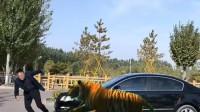 老虎看车特别安全