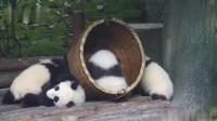 滚滚温馨提示:春运期间请各熊不要拥挤,按秩序排队接受检票!