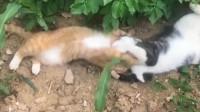 橘猫:兄弟,开个玩笑别这么认真呀!不要打脸