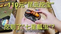 """110元豪华""""昆虫标本挖宝"""",挖到七星瓢虫和蝎子,这次赚到了"""
