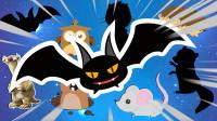 学习认识蝙蝠、树懒等8种动物