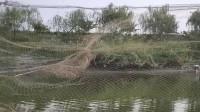 大叔远投9米大网,当渔网落到水里那一刻,我震惊了!