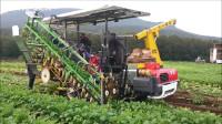 萝卜收获现代机器日本农业农场-萝卜加工