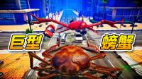 螃蟹大战01:大闸蟹VS大红蟹
