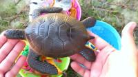 通过玩具动物学习认识海龟、青蛙等8种动物