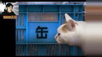 诡异猫咪午夜街道闲逛,被鬼猫灵魂附体精神一蹶不振