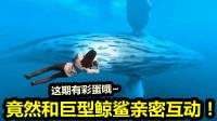荒岛求生p10我竟然和巨型鲸鲨亲密互动!这家伙简直是巨型潜水艇!挑战大白鲨~又又首度献唱!深海搁浅【开心又又