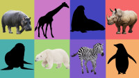 学习认识河马、犀牛等8种动物