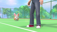 短腿小柯基:这一刻,神奇小柯基将打破腿短跳