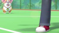 短腿小柯基:这一刻,我将打破腿短跳不高的传