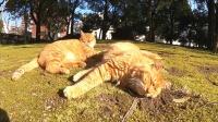 路遇两只猫躺在草地上午