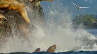 偶遇海豹下水,这场面太令人震撼了,网友:这是在下饺子吗?
