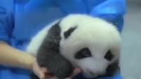 熊猫:糟糕!是心动的感觉!对于这种生物完全没有抵抗力