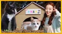 生活童话之照顾流浪小猫咪 | 爱丽和故事  EllieAndStory